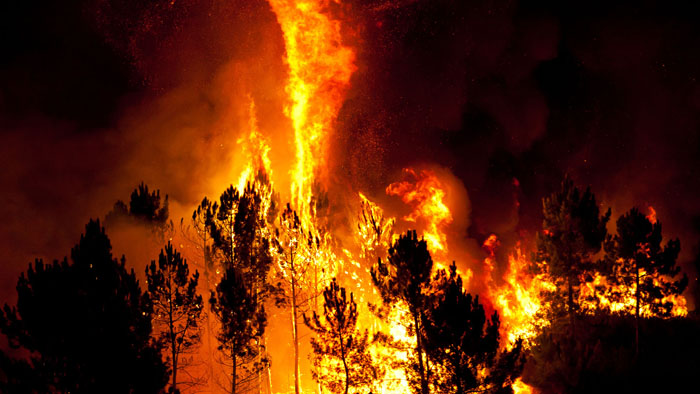 New Zealand: Insurance claims for Ohau fire reach US$24m