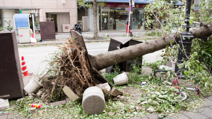 Deadly typhoons in Japan costs insurers $17bn, estimates Munich Re